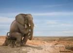 elephant_sitting